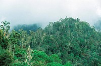 tropical rainforest in Arfak mountains, Arfak mountain range.