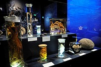 Exhibits, preserved in glass, Coral Reef exhibition, Museum of Man and Nature, Munich, Upper Bavaria, Bavaria, Germany