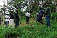 Reforestation of the rainforest on the Irente farm, in the Usambara Mountains, Tanzania, Africa