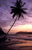 coconut palm Cocos nucifera, on the beach in frint of an island, evening mood, Trinidad and Tobago