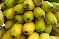 Bananas, Palmas, Tocantins, Brazil