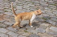 Animal, Cat, Rio de Janeiro, Brazil