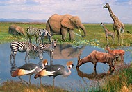 wild african animals at a waterhole