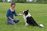 Border Collie Canis lupus f. familiaris, young woman with dog on a meadow, giving the paw