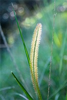 Grass seed in soft light against blurred background
