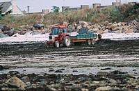 alga recovery, France, Brittany, Roscoff