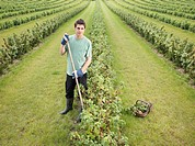 Man With Rows Of Blackcurrant Shrubs