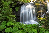 waterfalls in Triberg, Black Forest with Petasites, Germany, Baden_Wuerttemberg