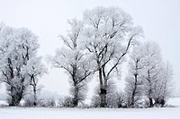 Trees covered with hoar frost in snow-covered landscape in winter, winter landscape, Oberalsterniederung nature reserve, Schleswig-Holstein, Germany