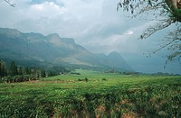 tea plantation in front of the Mulanje mountains, Malawi, Phalombe Plain, Mulanje