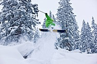 Freestyle skier jumping in a mountain terrain in a wintery forest, Hochfuegen, Zillertal valley, North Tyrol, Austria, Europe