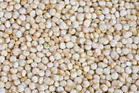 quinoa Chenopodium quinoa, grains, seeds
