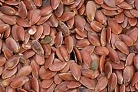 common flax Linum usitatissimum, seeds