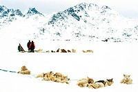 Greenland Dog Canis lupus f. familiaris, dog sled at Kong Oscar Fjord during a cloudy day, Denmark