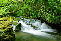 brook flows over cascades through forest, Croatia, Dalmatien, Krka Nationalpark