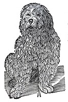 Woodcut, English Water Dog Canis aquarius, aquaticus, Conrad Gesner, Historia Animalium, 1551, Renaissance