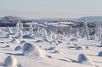 village in snowy landscape, Finland, Oulu, Kuusamo