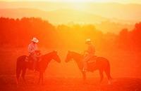 Quarterhorse Equus przewalskii f. caballus, western rider in evening rider
