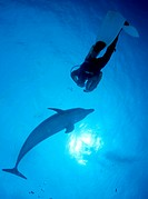 Bottlenose Dolphin Tursiops truncatus and scuba diver, Bahamas, Central America
