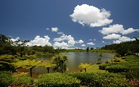 Tea plantation of the Bois Chéri Tea Factory, lake, highland, Mauritius, Africa