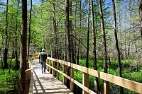 Breaux Bridge, Louisiana - A visitor on a boardwalk at the Cypress Island Preserve managed by the Nature Conservancy