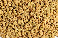 Fenugreek seed / Trigonella foenum_graecum / Greek Clover, Greek Hayseed, Greek_clover