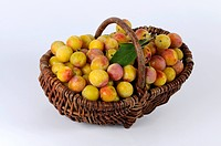 Yellow Plums / Prunus domestica var. syriaca / basket