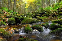 forest creek in autumn, Germany