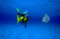 Female scuba diver encountering an Ephippidae (Platax teira) in the Maldives, Asia