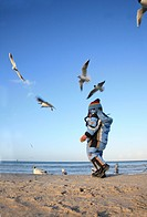 little boy feeds gulls at the beach, Germany, Ruegen, Binz