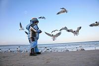 little boy feeds gulls at the beach, Germany, Ruegen, Binz