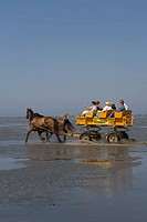 Horse drawn taking tourists from Cuxhaven-Duhnen through the North Sea mud to the island of Neuwerk, Cuxhaven-Duhnen, Lower Saxony, Northern Germany, ...