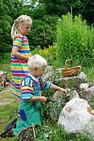 peppermint, hybrid_peppermint Mentha x piperita, Mentha piperita, M. aquatica x M. spicata, children during harvest
