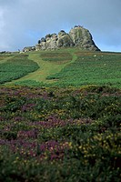 Dartmoor Nationalpark, Haytor, United Kingdom, England, Devon, Dartmoor Nationalpark
