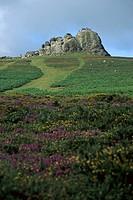 Dartmoor Nationalpark, Haytor, United Kingdom, England, Devon, Dartmoor Nationalpark