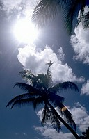 Palm trees against a blue sky with white clouds