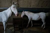 Horses on a pasture under a bridge