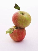 Two apples variety Elstar