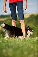 Begleithund,Beschaeftigung,Bewegung,Dog Dancing,Dogdance,einzeln,Hochformat,Huetehund,Kind,Knie antippen,Mensch,Rassehund,seitlich,Sheltie,Shetland Sh...