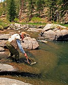 trout fishing, USA, Colorado, Eleven Mile Caynon