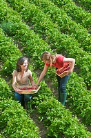 women in field with strawberry baskets