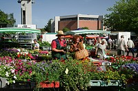 Flower and plant market in Waldkraiburg, Upper Bavaria, Bavaria, Germany Europe
