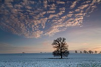 evening glow in winter above a field, Germany, Saxony, Vogtlaendische Schweiz