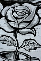 Black and white rose street graffiti paint detail wall