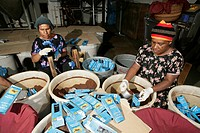 Women are packaging highlands coffee, roastery, Goroka, Papua New Guinea, Melanesia