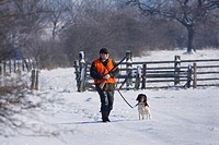 Small Munsterlander Canis lupus f. familiaris, battue in winter, hunter with dog, Germany