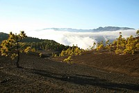 sparse plateau on La Palma, Canary Islands, La Palma