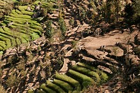 Hand-made terrace cultivation in the mountains surrounding Nagarkot, Nepal, Asia