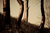 Germany, Bilfingen, Tree trunks, close_up