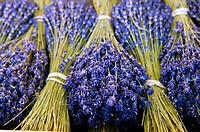 Bunches of Lavender flowers, France, Nice